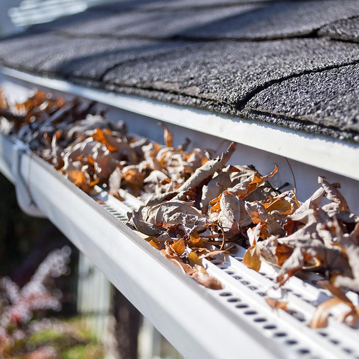 died leaves on the rain gutter